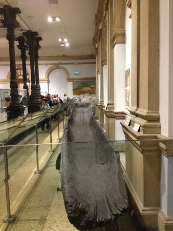 National Museum of Ireland - Archaeology: National Irish Museum1