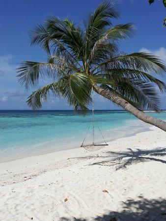 Vilamendhoo Island Resort & Spa : Just me and a tree