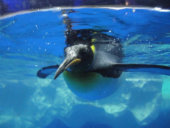 Kelly Tarlton's Sea Life Aquarium : Pinguin