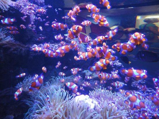 Kelly Tarlton's Sea Life Aquarium : Nemo