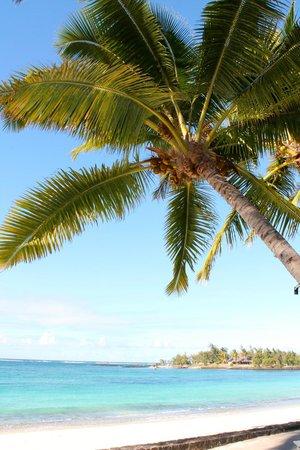 Constance Belle Mare Plage : Palms