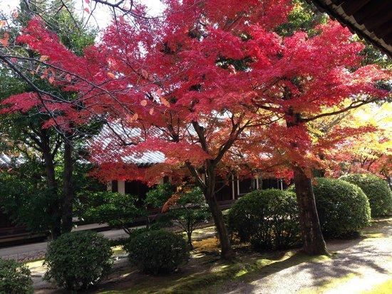 Horyuji Temple: 法隆寺