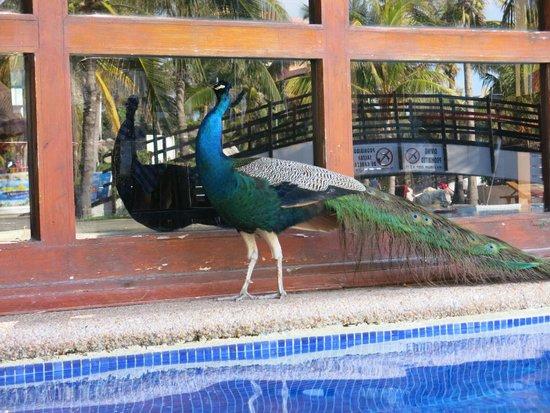 Grand Oasis Cancun : жители отеля