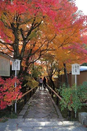 Koetsuji Temple: 光悦寺入口