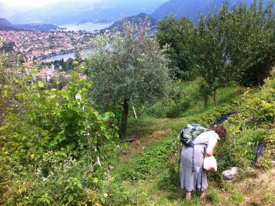 B&B L'Isola Comacina : organic farm in the yard