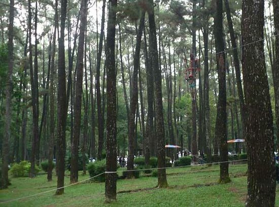 Punti Kayu Tourism Forest