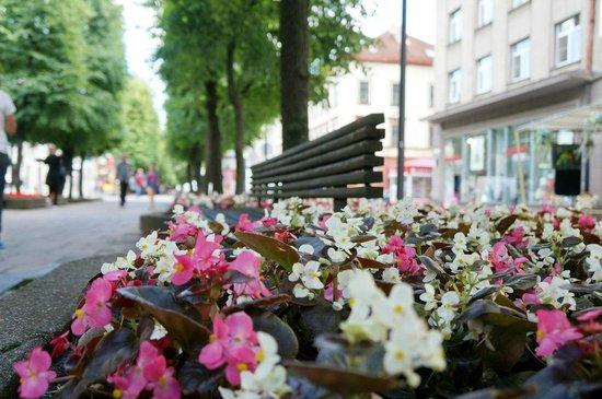 Laisves aleja (Liberty Boulevard): Цветы возле скамейки по центру улицы