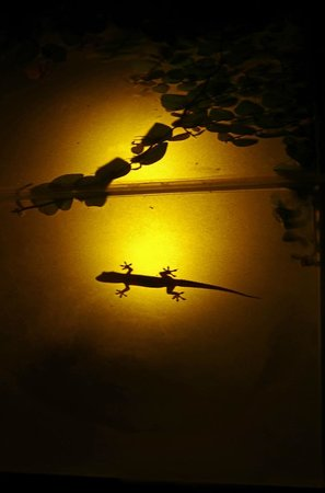 Rama Candidasa Resort & Spa: Gecko in garden light box.