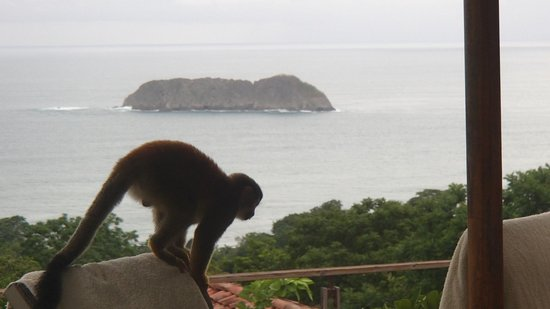 Sí Como No Resort & Wildlife Refuge: Squirrel monkey and view from pool