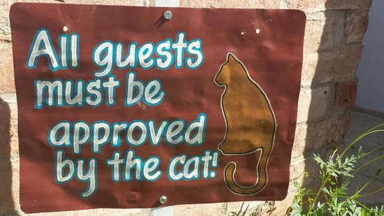 Peach Tree Inn & Suites: Cat friendly :)