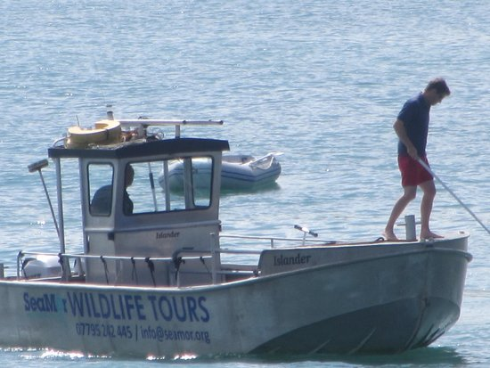 SeaMor Dolphin Watching Boat Trips: The Islander