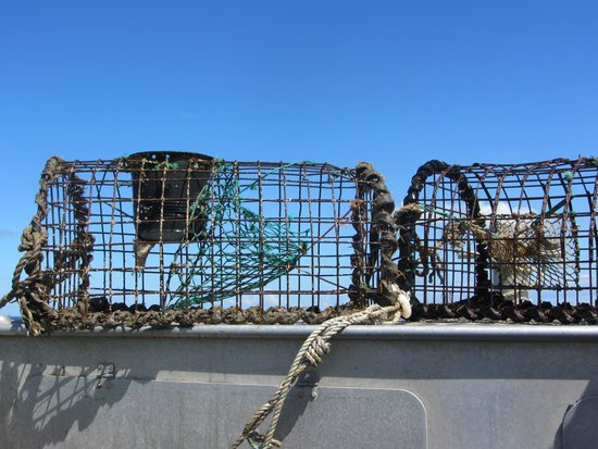 SeaMor Dolphin Watching Boat Trips: Lobster pots