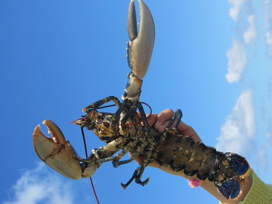 SeaMor Dolphin Watching Boat Trips: Lobster
