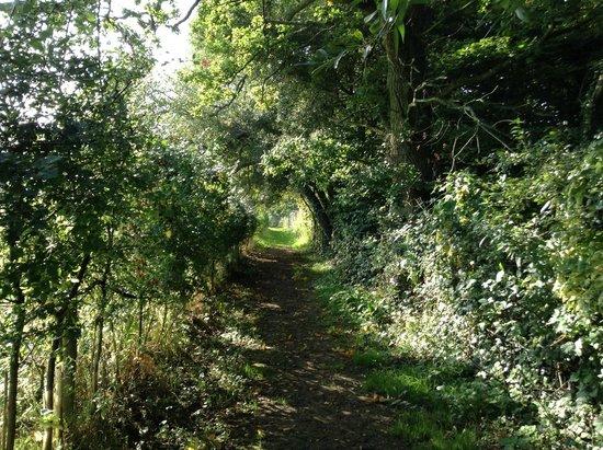 Hill Cottage Farm Camping & Caravan Park: Dog walk