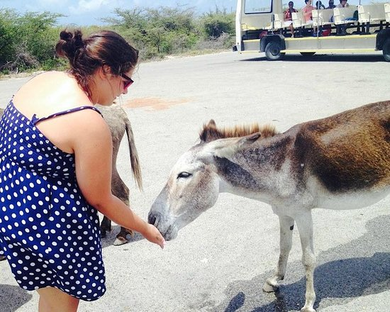 Cockburn Town, Grand Turk: At the lighthouse stop on the tram tour, feeding the friendly donkey some cheerios.