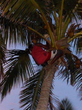 Bounty Island Resort : Getting us coconuts on out last night to have piña coladas out of them