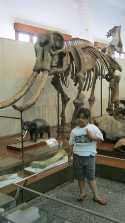 Geologisches Museum: with pre historic elephant skull replica