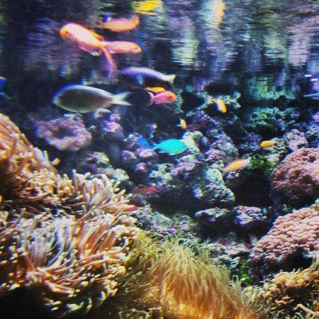 Sea Life Sydney Aquarium : I paid $40 for this?!