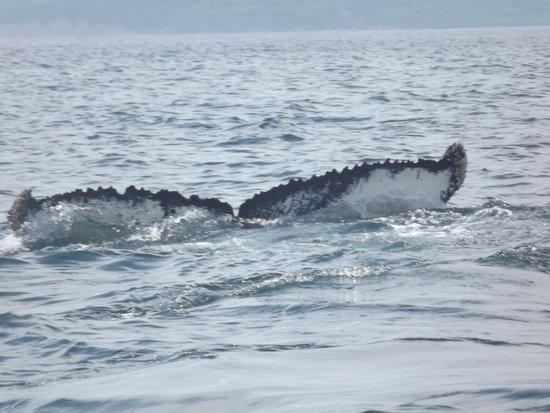 Dixon's Zodiac Seafari: humpback