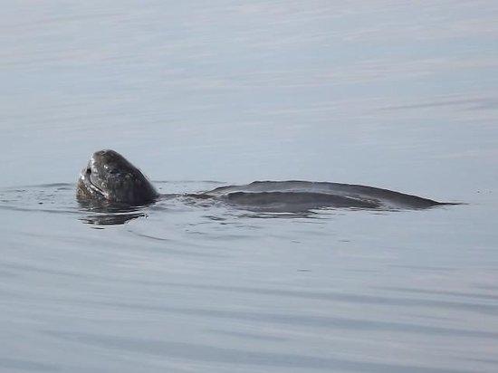 Dixon's Zodiac Seafari: leatherback turtle