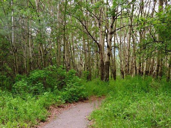 Pocahontas Cabins: Pocahontas trail 2