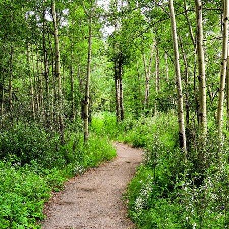 Pocahontas Cabins: Pocahontas Trail