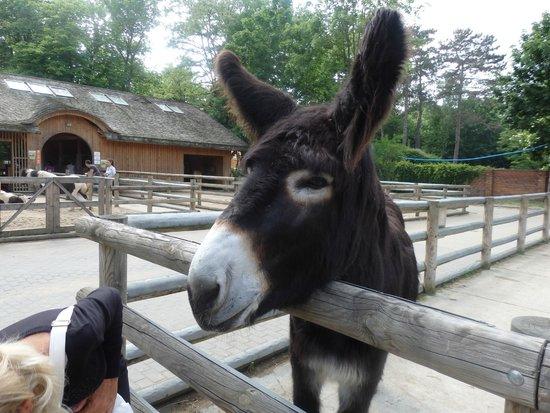 Wroclaw Zoo & Afrykarium : Best Donkey