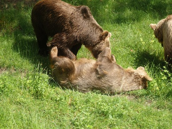 Wroclaw Zoo & Afrykarium : Big Bears