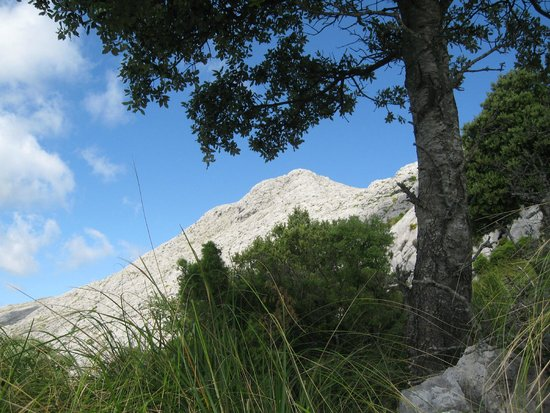 Serra de Tramuntana: Massanella summit from below