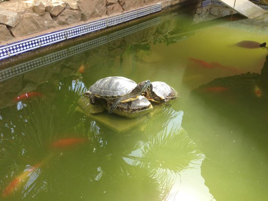Hotel Petit Cala Fornells: One of the turtles