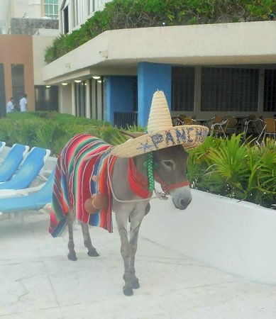 Golden Parnassus All Inclusive Resort & Spa Cancun: Donkey on the pool area you can take pics with