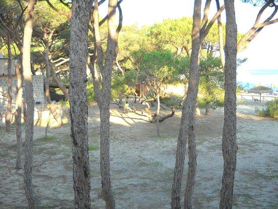 Residence Iselba: pineta