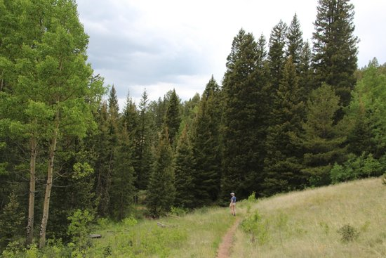 Mueller State Park: Along a trail