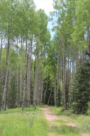 Mueller State Park: Trail through aspens