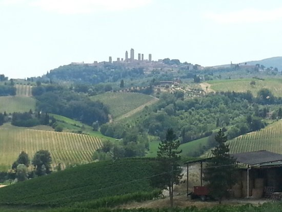 Walkabout Florence Tours : A view from the Winery