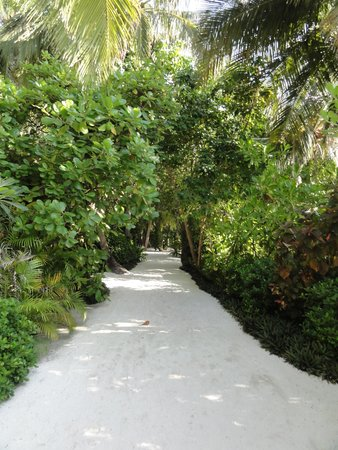 Baros Maldives : Pathway to breakfast