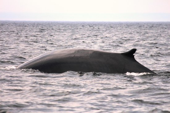 Hotel Tadoussac : Whale Watching
