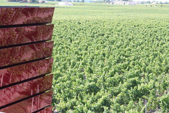 La Terrasse Rouge : View over the vineyard