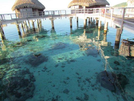 Sofitel Moorea Ia Ora Beach Resort : PRECIOSO