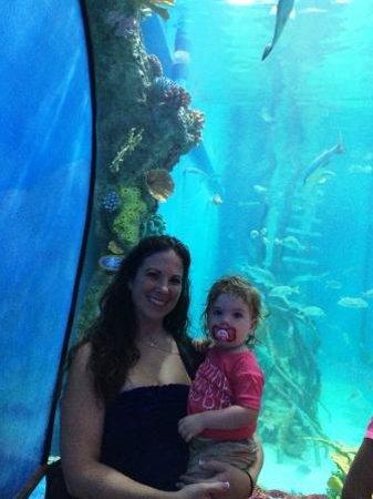Guy Harvey Outpost, a TradeWinds Beach Resort: Rumfish Aquarium view room