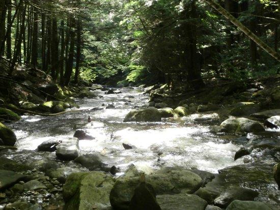 Jamaica State Park: near Hamilton Falls