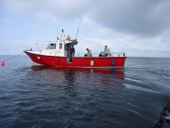 Saltee Islands: Our transport