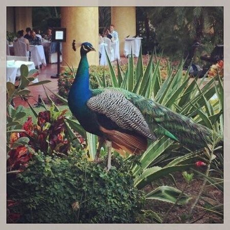 Velas Vallarta : One of the locals at the hotel.