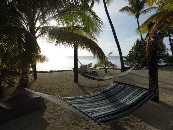 Lime Tree Bay Resort: Hammocks