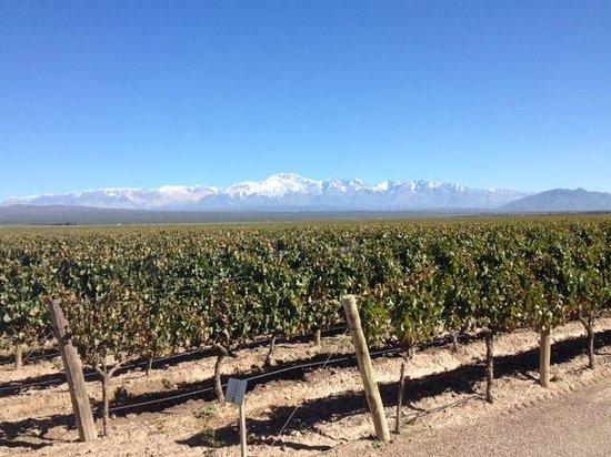 Ampora Wine Tours: Pulenta Estate Wine Vineyard
