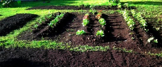 Hotel Robledal: Lovely soil enriched with organic compost