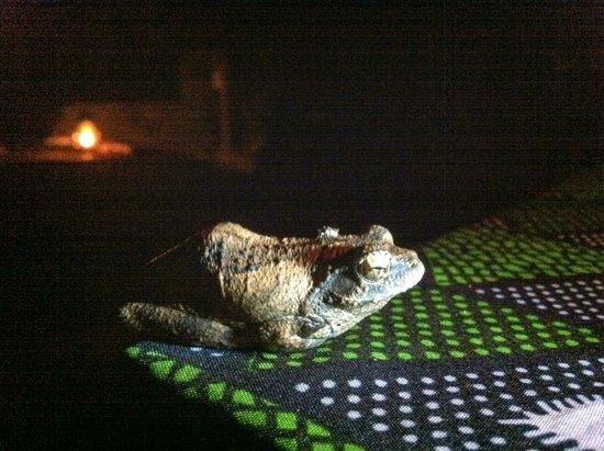 Liwonde Safari Camp : Friendly Frog at dinner