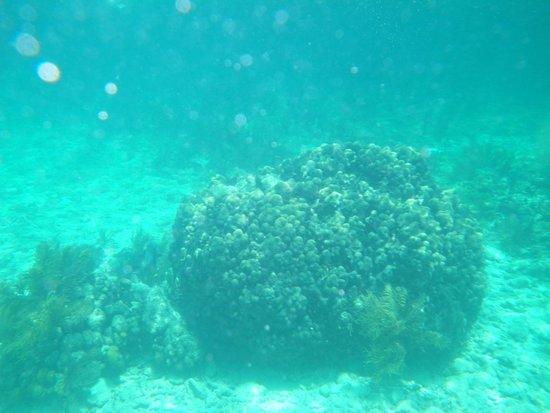Grecian Rocks: snorkeling