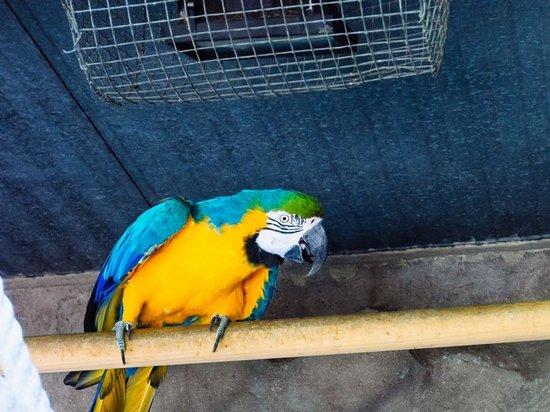 Zoo de Barcelona: Parrot