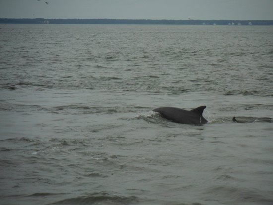 Captain Mike's Dolphin Tours : lots of dolphins